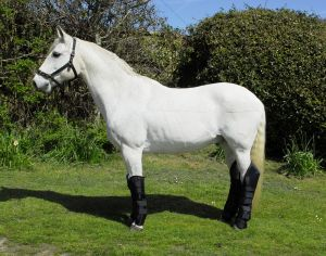 Rhinegold elite full travel boots chiron equestrian